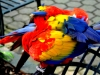 color-ball-with-feathers