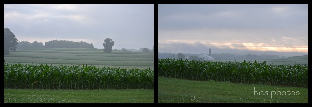 Diptych of Foggy Morning