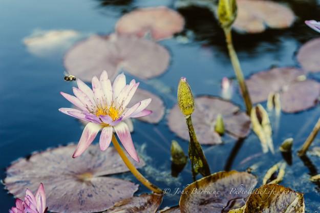 flower, bee, bumble bee, pollen