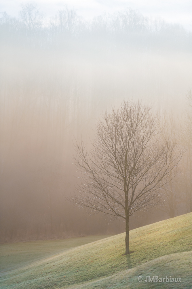 sunrise, tree, backyard, fog, winter