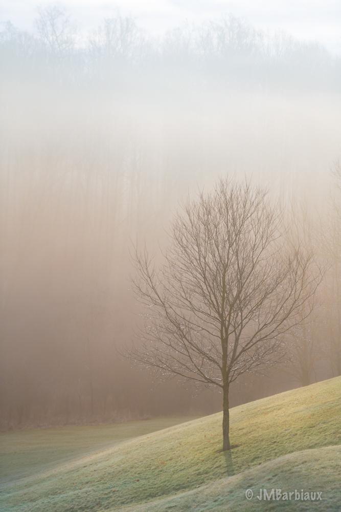 sunrise, tree, backyard, fog, winter
