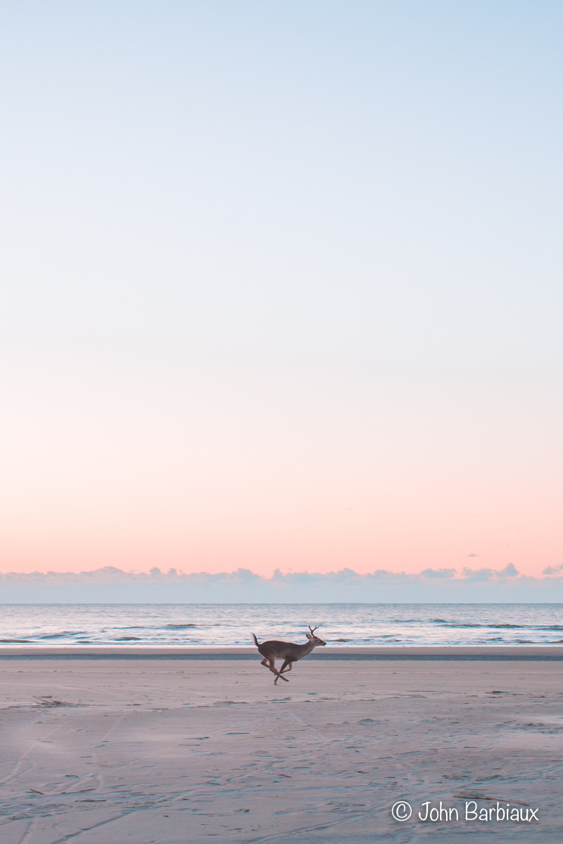 Buck, Kiawah Island, Fine Art, Photography, Leica, Minimalist, Seascape, sunset, wildlife, South Carolina, Charleston