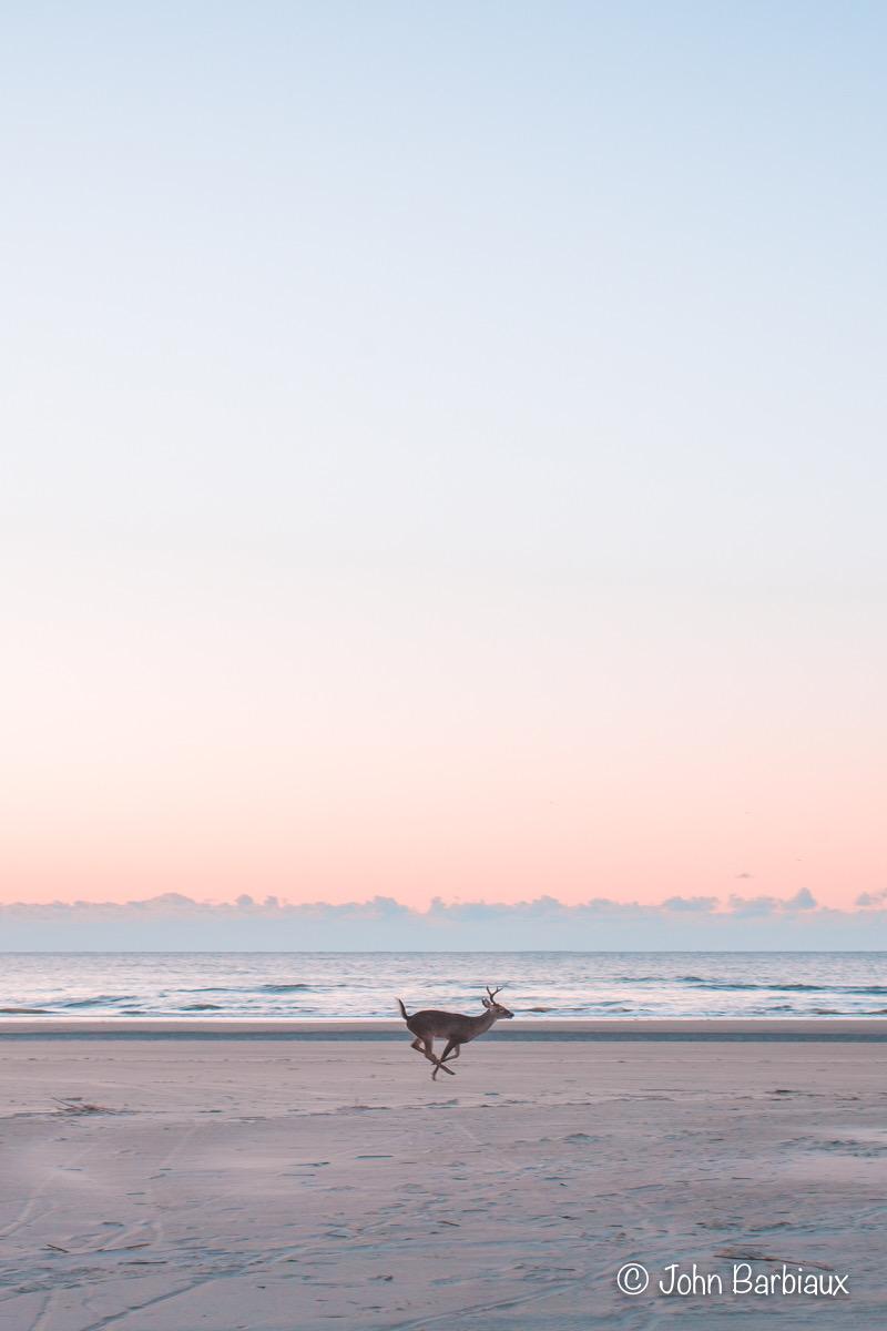 Buck, Kiawah Island, Fine Art, Photography, Leica, Minimalist, Seascape, sunset, wildlife, South Carolina, Charleston