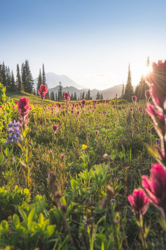 Tipsoo Lake, Mount Rainier, Mt. Rainier National Park, wildflowers, sunburst, sunset