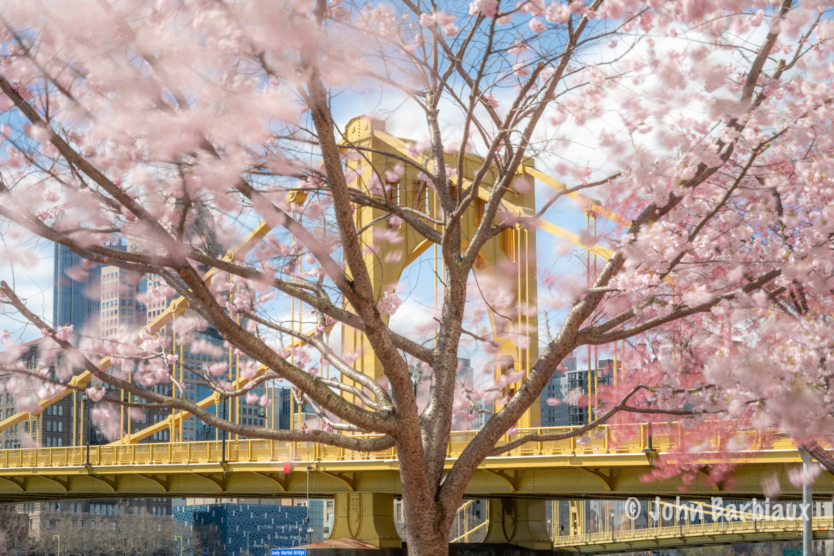 Cherry blossoms, Pittsburgh, north shore, fine art photography, Pittsburgh, bridges, spring, city
